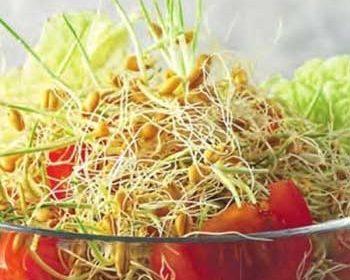 Салат из пророщенной пшеницы