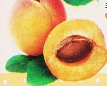 Соус из свежих абрикосов для блинов на молоке